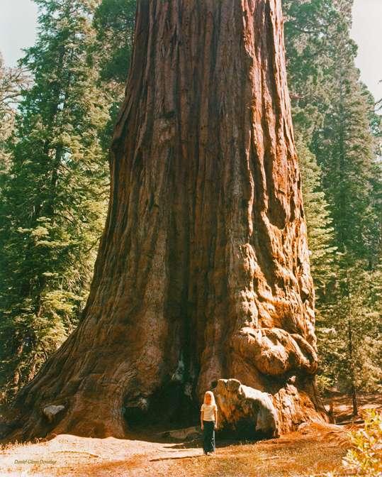 redwoodverticle.jpg